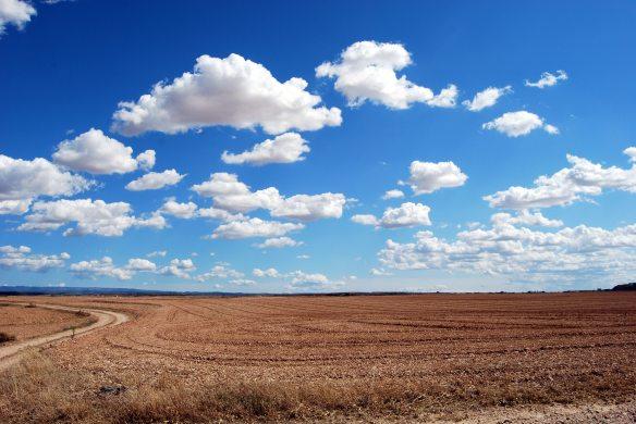 agriculture-arid-bright-46160